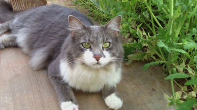 Precautions to save your cats from bobcats disease.